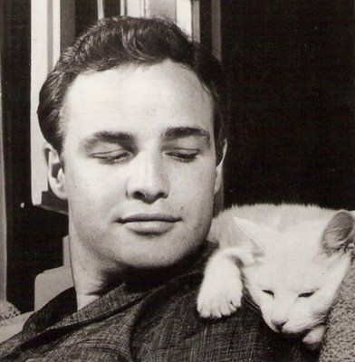 Apparently the actor Marlon Brando was a cat lover,