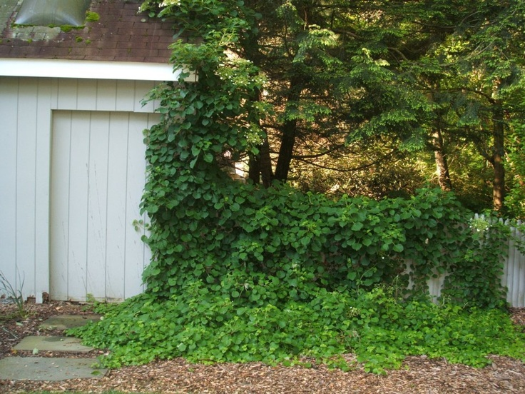 Shade climbers! | Green Acre | Pinterest