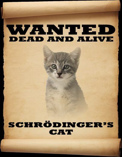 Schrödinger's cat | General geekery | Pinterest