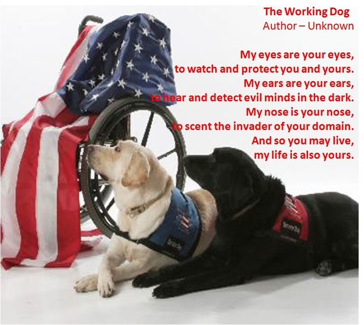 service dogs | Police and Service Dog Training