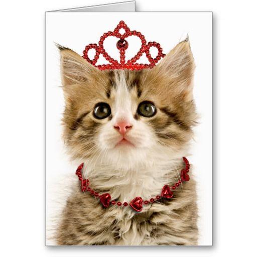 valentines day kitten wallpaper