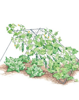 Cucumber trellis, I'm think I'm going to try to make one out of an old fence gate
