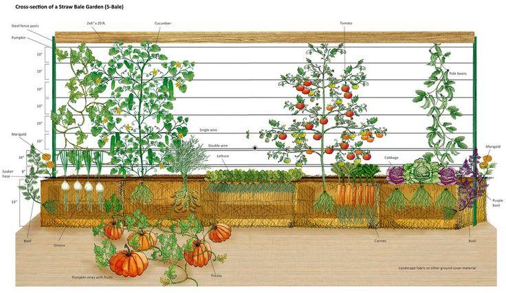 6 ways growing tomatoes hay bales.  Found on lrd.buffalohair-jage.com