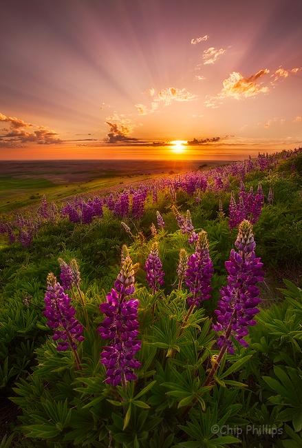 Steptoe Butte, Washington