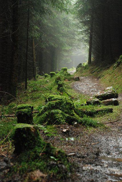 Singletrack through Afan forest