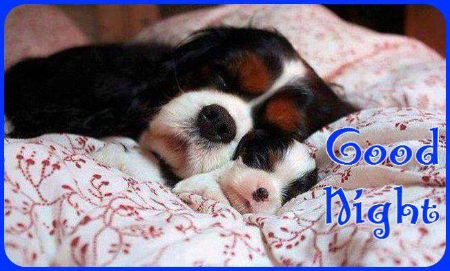 Good Night [Dog with pup] | Good Night ☾ | Pinterest