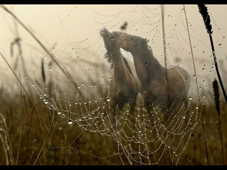 horse rain Created for designed for protecting your horse when exercising in wet weather.