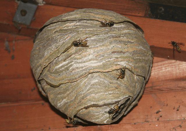 Paper Wasp Nest | Wasps Nest Inspiration | Pinterest