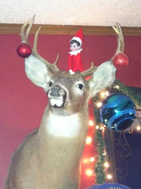 ... Elf on the Shelf Photo Contest or submit your own elf photo for a