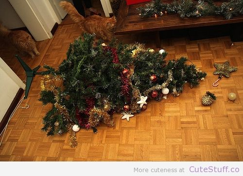 Making christmas more fun cats doing things pinterest