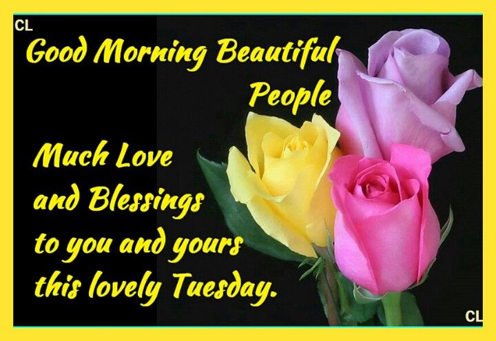 Good Morning Everyone Happy Tuesday : Good morning tuesday quotes weekday weekend and