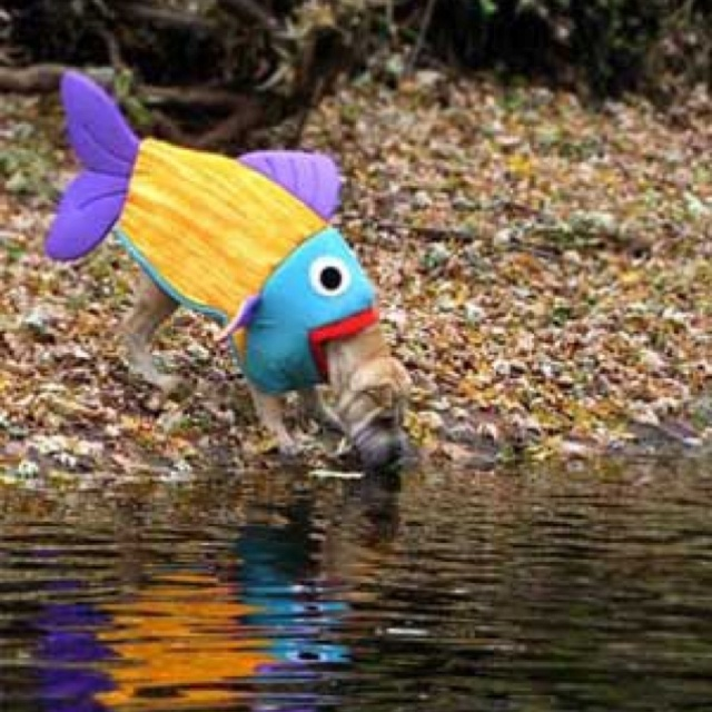Dog eating fish disguises and wigs pinterest for Is fish bad for dogs