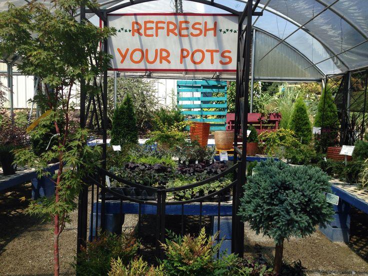 Late summer container ideas garden center pinterest for Idea verde garden center
