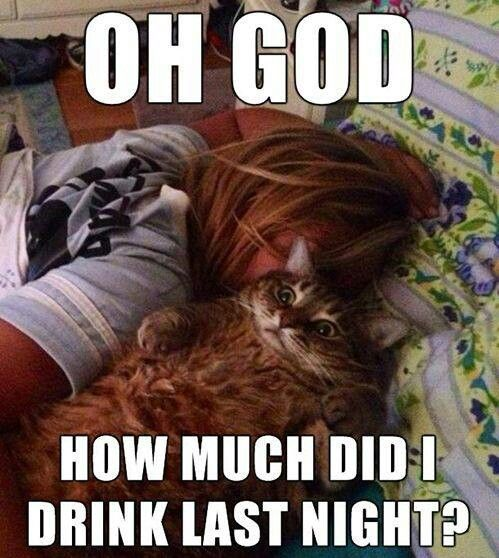 Funny Cat Drinking Meme : Cats how much did i drink funny pinterest