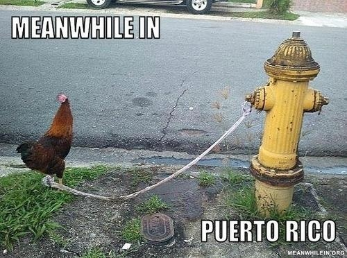 Funny Puerto Rican Memes Jokes