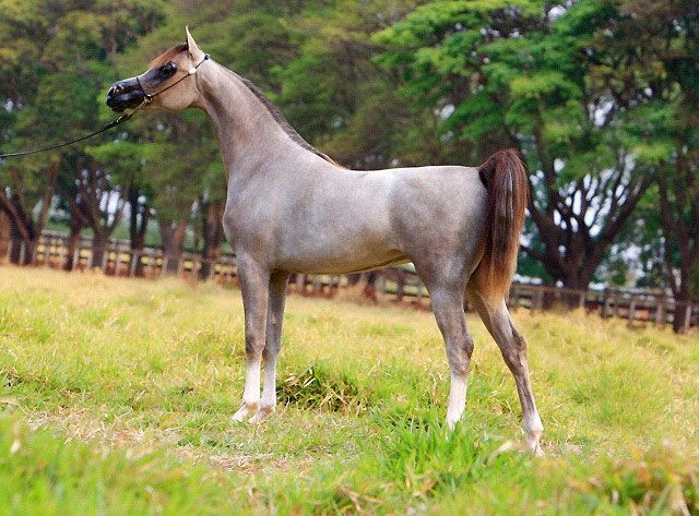 how to bring out roan colour in horses