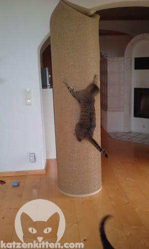 Diy cat tree tutorial german crazy cat lady pinterest for Diy cat tower cardboard