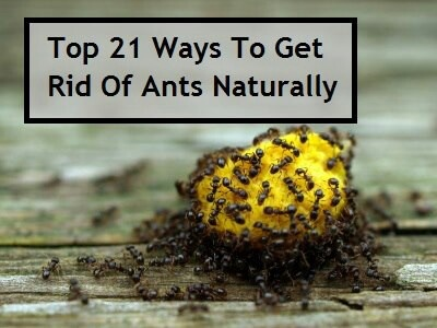 Natural Ways To Get Rid Of Ants Just In Case Pinterest