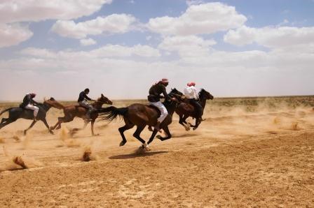 valentine horse pictures