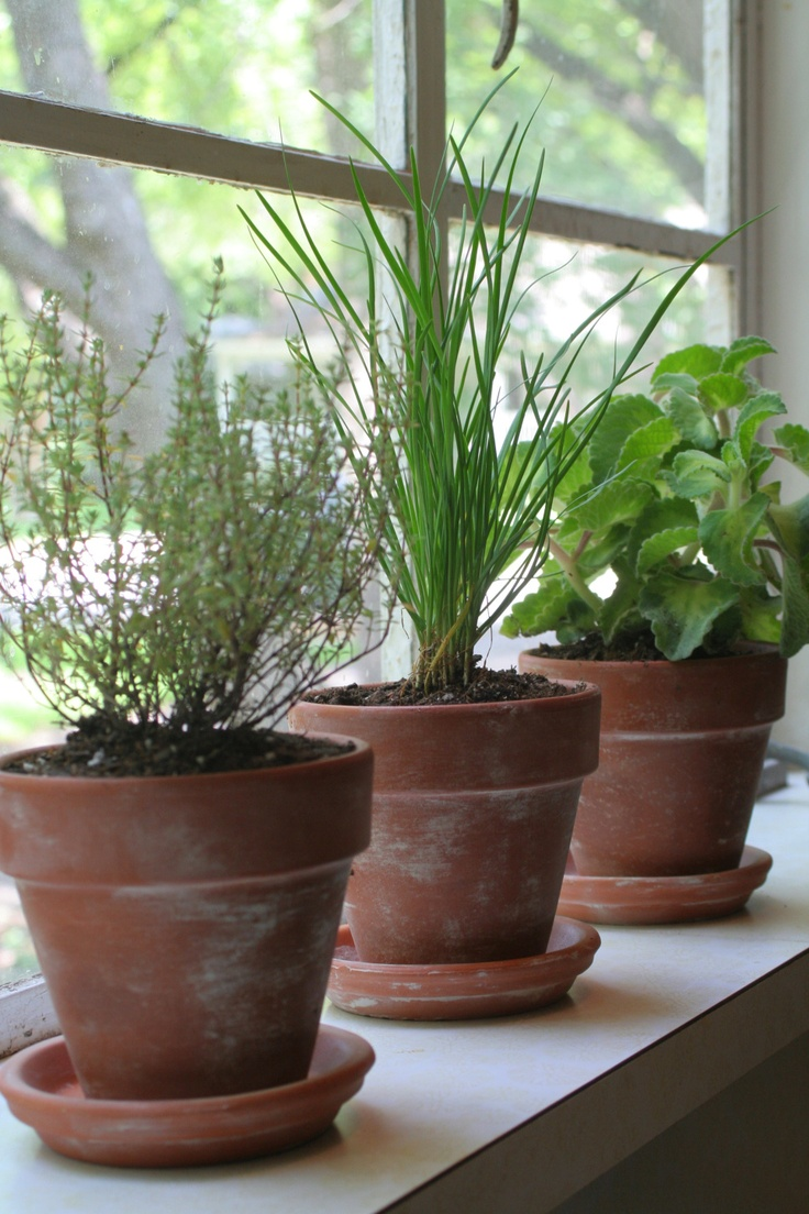 Indoor Potted Herbs Container Plant Combos Pinterest 400 x 300