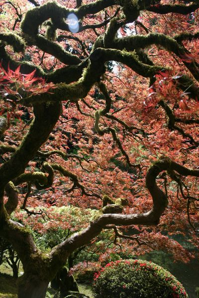 Portland Botanical Gardens Things For My Wall Pinterest