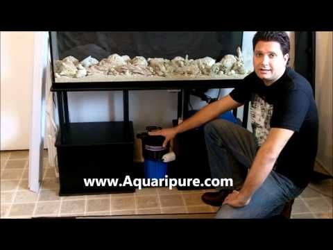 Easy maintenance fish tank youtube quarantine tank with for How much does a fish cost
