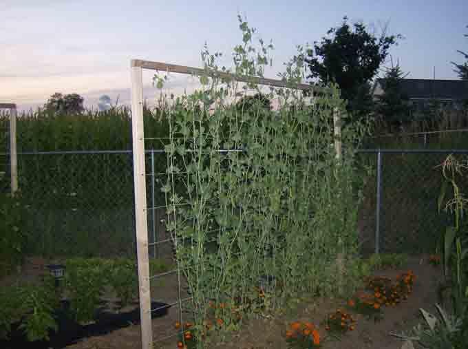 trellis designs | Vertical Supports for Trellising Vegetables ...
