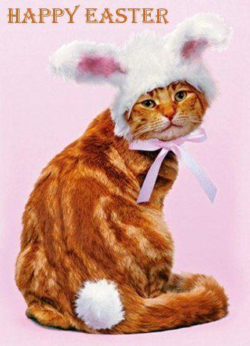 happy easter ginger cat bunny kittens amp cats pinterest