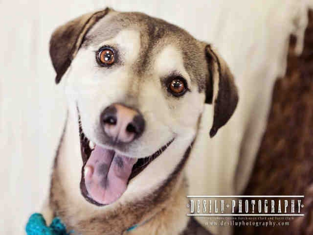 . She is available at Forsyth County Animal Control in Winston-Salem ...