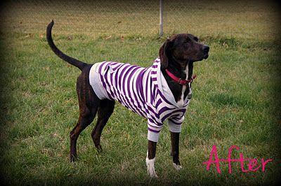 Modify a sweatshirt for a dog!