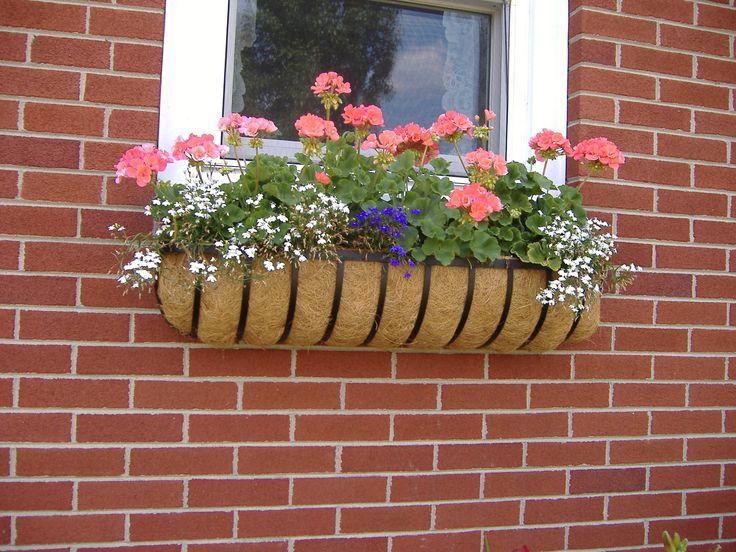 Window Box Contest Entry Rose\'s Beautiful Windows