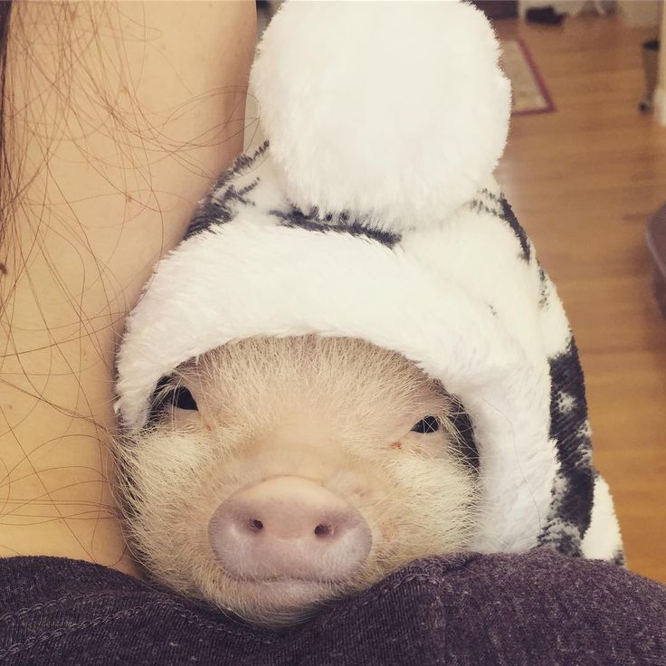 Cute funny baby pigs