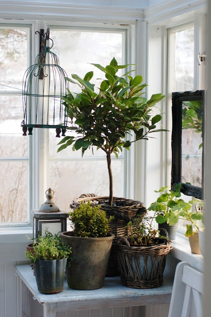 Pretty Indoor Plant Display For The Home Pinterest