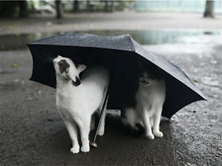 Image result for Cat Under Umbrella