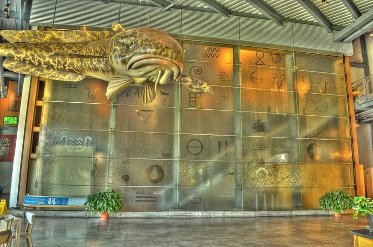 Great Lakes Aquarium Duluth Mn Minnesota Museums