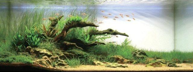 Aquarium Landscaping Aquarium Pinterest