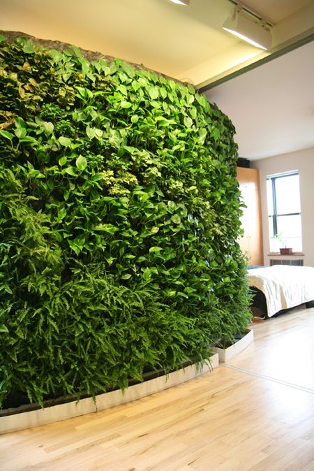 Oh that's just my living wall.