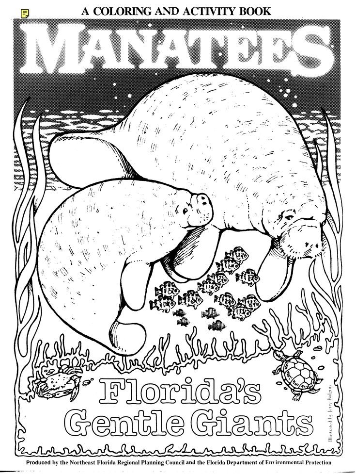 manatee free coloring pages - photo#36