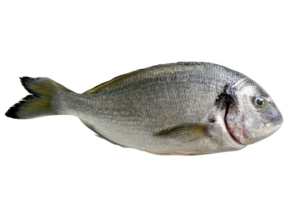 cold water fish inspirations for healthy eating and