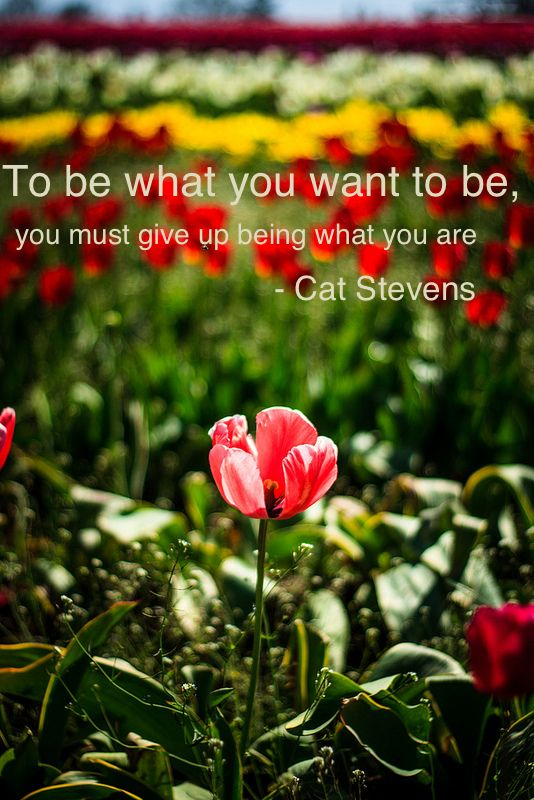 """To be what you want to be, you must give up being what you are."" Cat Stevens"