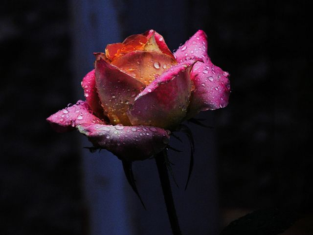 valentine day no flowers