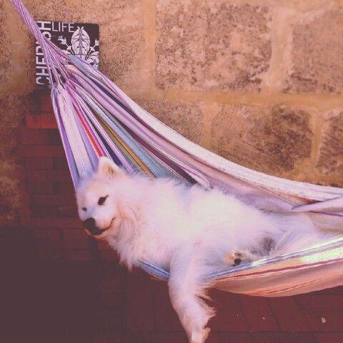 Cherish life | Hippie happy Life ...