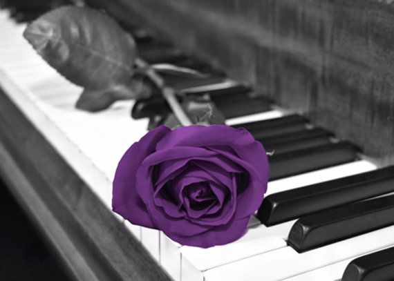 Black White Purple Rose Flower On Piano Keys Wall Art Photography Home    Piano With Rose Photography