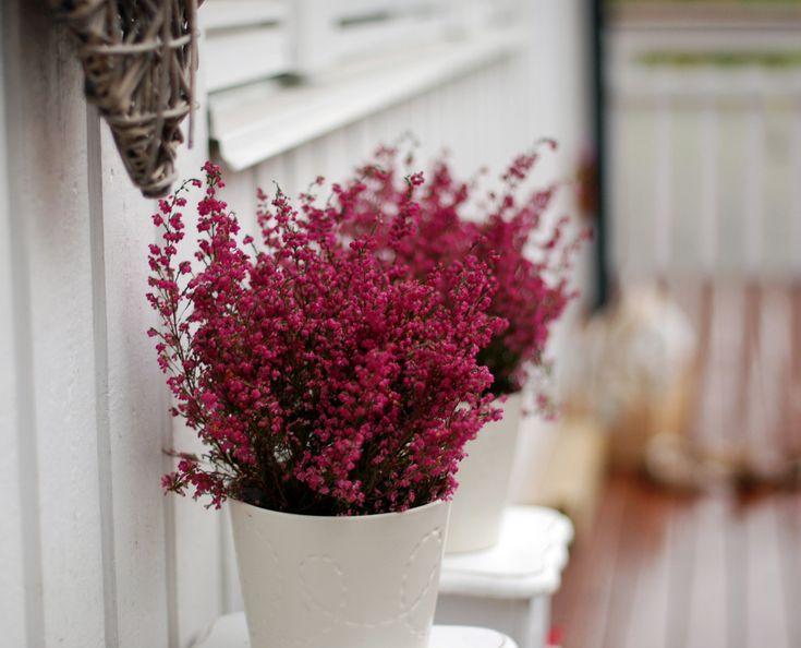 Flowers, white vase