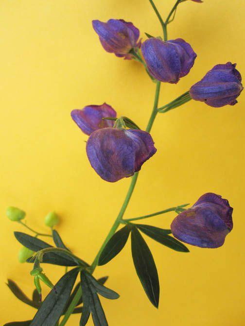 Yellow purple color schemes complements purple and - What color complements purple ...