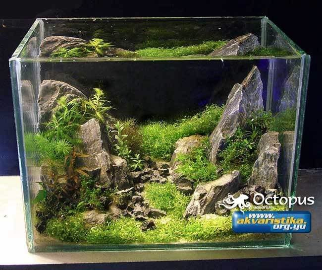 Nano Aquarium Plants : Nano aquarium Aquascaping and fishtanks Pinterest
