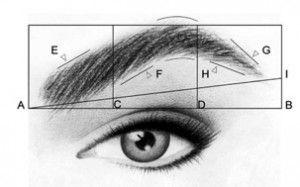 http://www.dieu-crea-la-femme.com/2012/11/15/les-regles-pour-des-sourcils-parfaits/ Les deux premiers tiers du sourcil doivent être ascendants ( monter ) Le dernier tiers est descendant. Sur l'image le troisième trait blanc vertical indique le point le plus haut du sourcil, comme vous voyez, il ne se trouve pas au milieu ou vers le début du sourcil.  C'est au cours du derniers tiers ( celui qui descend ) que l'on commence à affiner et à faire rapprocher les bords. H et G sur l'image.