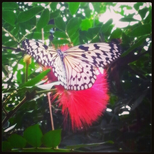 Butterfly Garden In Victoria Bc Butterfly Dragonfly Pinterest