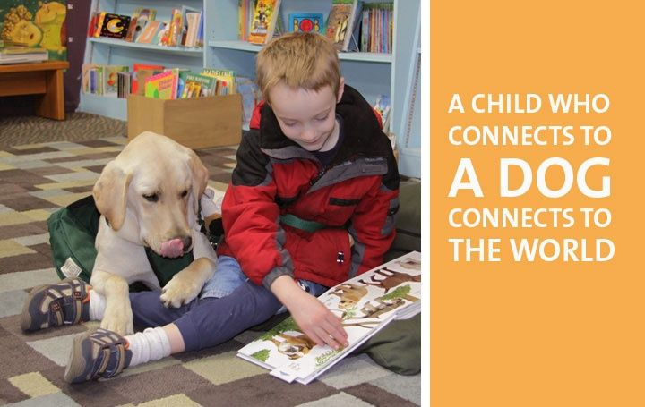 service dogs for autism essay Parents of kids with autism fight to get service dogs in schools the first agency in the world to train autism service dogs paradise papers star projects.