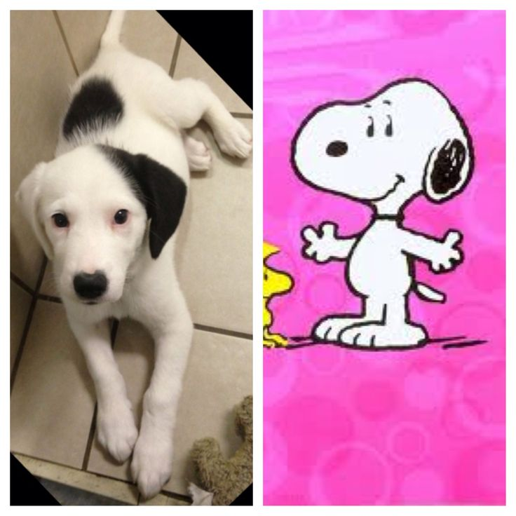 the real life snoopy be jealous girls best friend